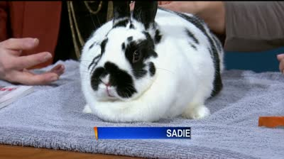 Rabbits available for adoption at humane society