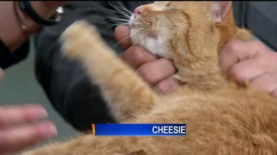 Pet of the Week: Cheesie