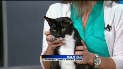 Holyfield the cat needs a new home